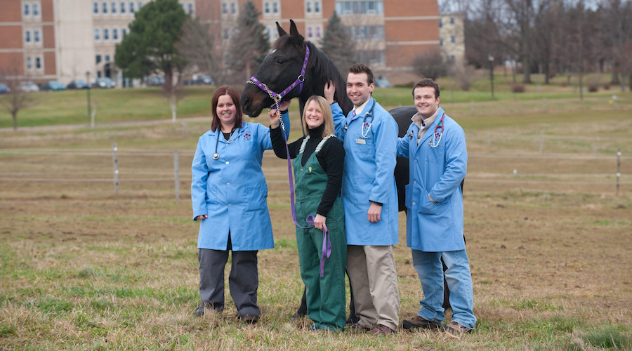 four vet students and a horse