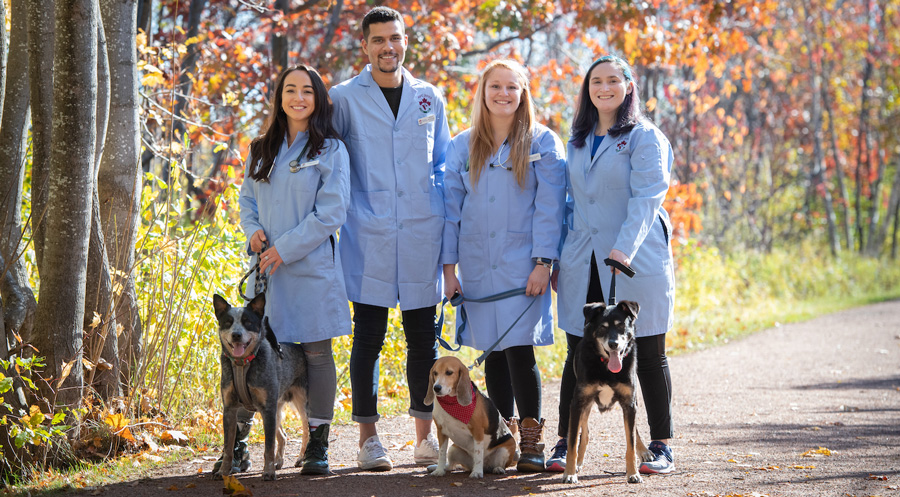 veterinary students and dogs on the confederation trail