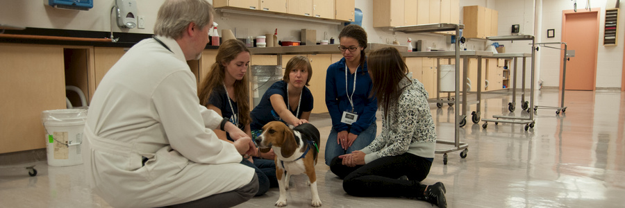 veterinarian and students with a beagle