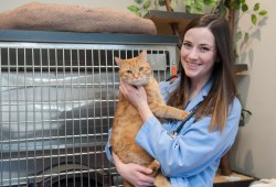 veterinary medicine student holding an orange cat