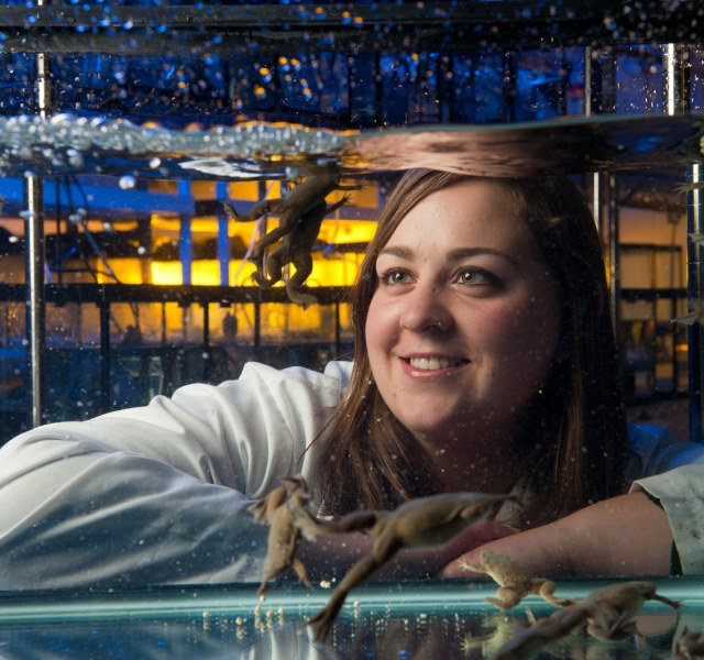 female scientist watching frogs swim in a tank